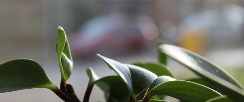 Pokojové rostliny pro každého