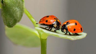 Proměnlivá říše hmyzu