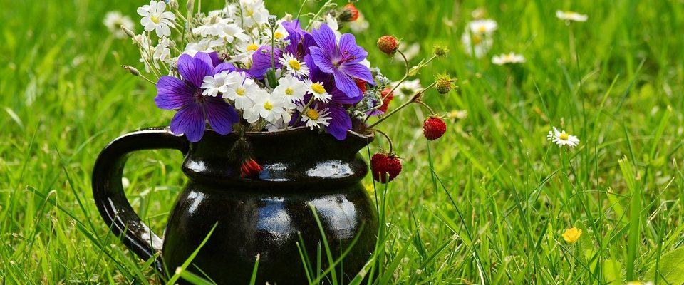 Jaro díky lučnímu kvítí