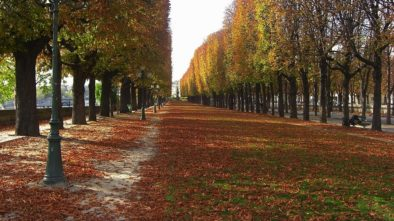 Věděli jste, že brněnské stromy mají čidla? Choďte je také zalévat