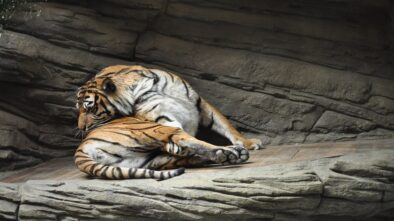 V brněnské zoo chystají novou expozici